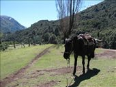 On the Chilean side of the river they used horses to drag the boat up to the plane grass where it could be packed in the car.: by royandania, Views[104]