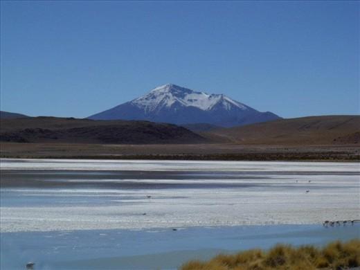 Flamingos in the Laguna Colorada - Bolívia