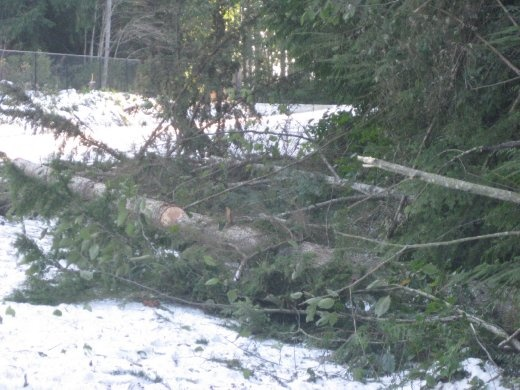 Many trees came down causing power outages.  We lost power for 1.5 days.