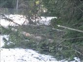 Many trees came down causing power outages.  We lost power for 1.5 days.: by rtumicki, Views[192]