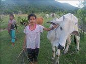 Cow watchers: by rtumicki, Views[308]