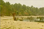 Seaweed Walk: by rumputlaut, Views[78]