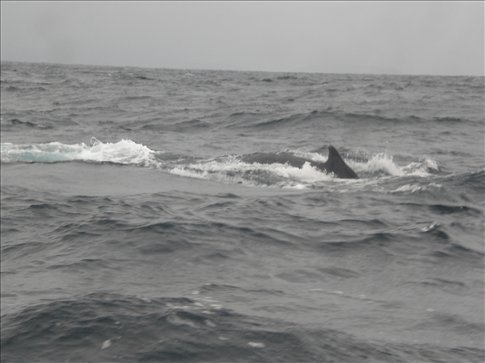 Puerto Lopez, Ecuador...the whale watching...didnt really get any great photos...not fast enough shutter speed...