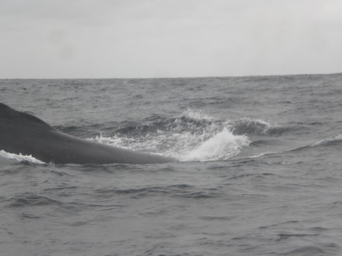 Puerto Lopez, Ecuador...whale watching