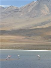 Salar de Uyuni 3 day trip: by ryanj_clark, Views[82]