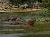 Pampas 3 day jungle tour in Rurrenabaque: by ryanj_clark, Views[744]