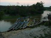 Pampas 3 day jungle tour in Rurrenabaque: by ryanj_clark, Views[130]