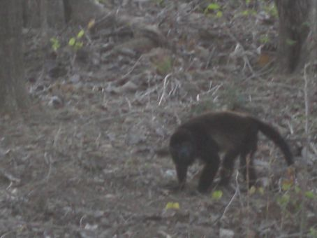 A monkey that I came across in Guanacaste nearby the beach...