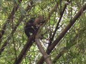Monkey: by ryanj_clark, Views[139]