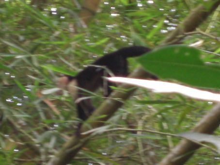 the monkey that was moving to fast to get a good photo of...