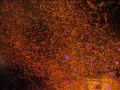confetti: by s-sandra, Views[125]