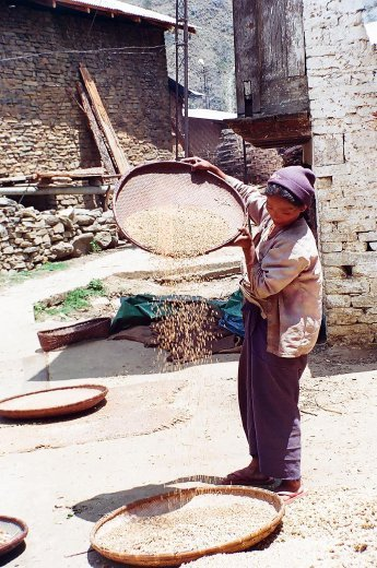 A local monpa lady chafing millets inside Dirang Dzong