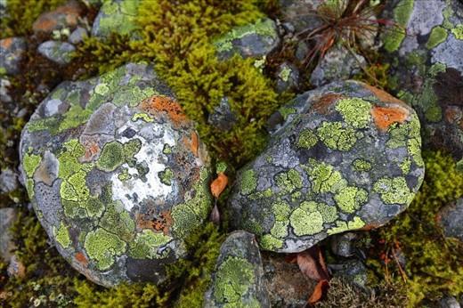 Kaleidoscope moss stones