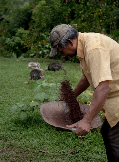 Once the cocoa seeds are ground, the huskl is then separated from the rest of the seed, by a traditional method of throwing them up in the air, allowing the wind to carry away the lighter husk, so that only the main seed remains.