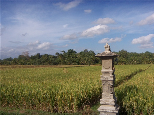 Scattered traditional stoneworks in some rice fields