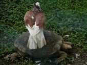 bird and turtle at vicamamba zoo.: by sally-annephillips, Views[1196]