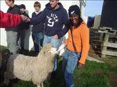 dans une ferme de moutons (Aisha): by sama, Views[255]
