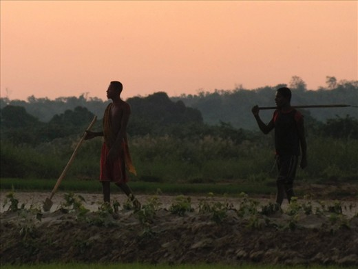 There are 18 ethnic groups native to Madagascar, each having their own beliefs and livelihoods. Those Sakalava men are going home after a long day's work in the fields.