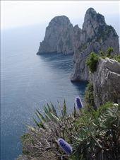 Wildflowers, Isle of Capri: by sandrad, Views[361]