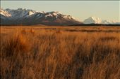 Soft lighting of sunrise looking out over a farm with Mount Cook in the background, Twizel.: by sarahv, Views[115]