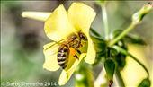 Honey n' flower: by saroj, Views[71]
