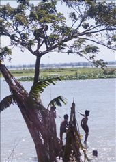 Travelling past Pasig River, we spot a group of boys jumping into the dark and murky waters from a tall tree without a care in the world.: by sealegs, Views[247]