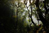 Beginning our decent through the fog of a jungle to reach Arjun's village.: by sean-a-sinclair, Views[321]