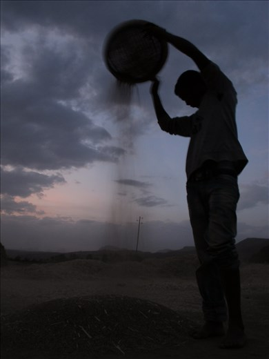 Sifting Grain in the Twilight