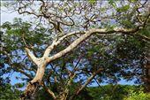 Proud old tree: by sebastian51, Views[118]