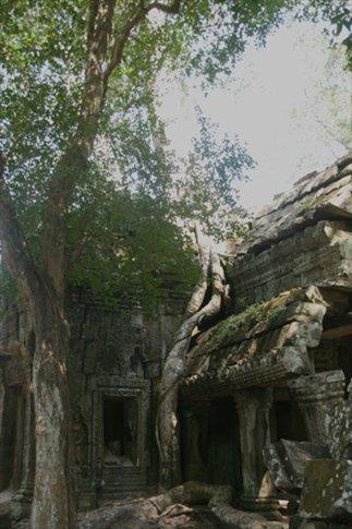Ruins at Ta Prohm