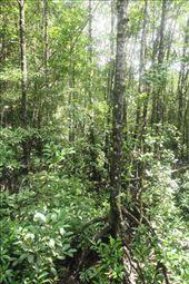 Deep in the mangroves, Similajau National Park: by seesea, Views[336]