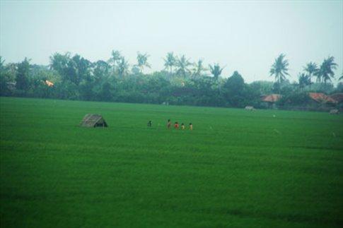 Jakarta to Yogyakarta, rice paddies
