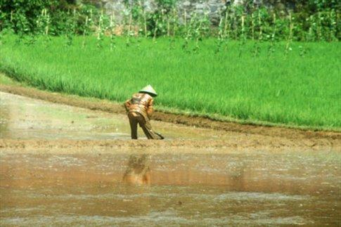 Rice farming is a dirty job