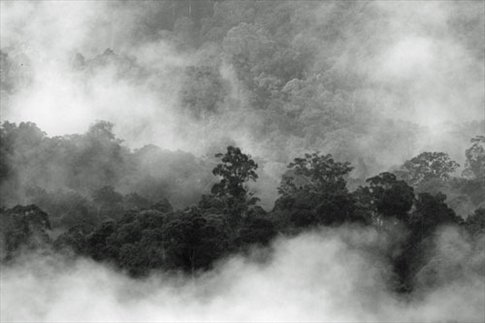 Morning in Borneo