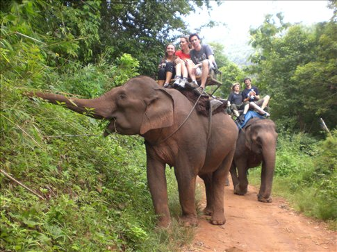No animals were harmed in the taking of this photo. Elephant trekking outside of Chang Mai
