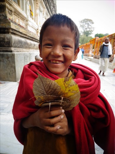 A young monk collecting holy leaves in Bodhgaya, India