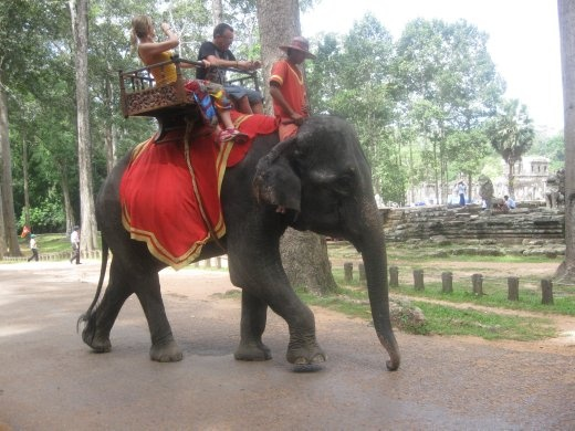 An elephant came up to us on our way out...