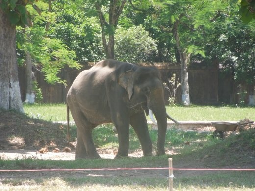 Our first elephant sighting! On the grounds of the Hue citadel.