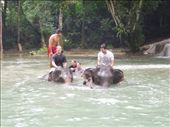 Elephant bathing madness!: by sglass, Views[139]