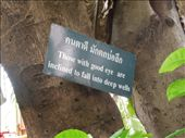 The trees around the temples had these little sayings in them... to make you stop & think: by sglass, Views[224]