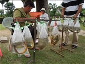 Woman selling baggies of pond creatures. You are supposed to buy one and then set the poor animals free in the nearby pond. This brings you good kharma.: by sglass, Views[44]
