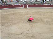 Bullfighting.: by shagger, Views[211]
