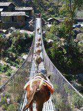 Everyone uses the trail bridges: by shane-erickson, Views[148]