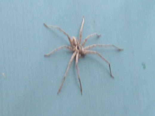 The spider that lives on our yurt