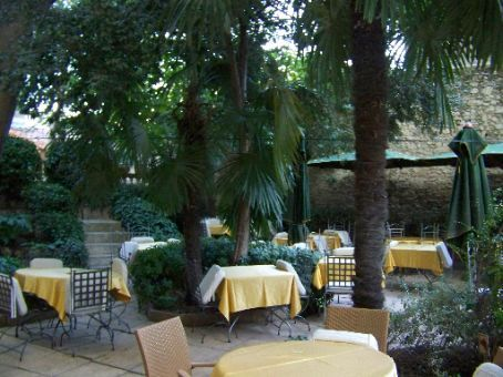 tea garden behind hotel calandel where I am staying
