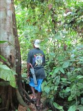 Orang Asli guide showing us the forest sites.: by shazbot, Views[159]
