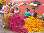 Ladies selling flowers for the dia de los muertos alters: by shelleytravels, Views[280]