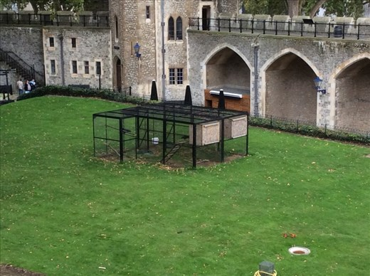 The legendary Ravens of the Tower of London.