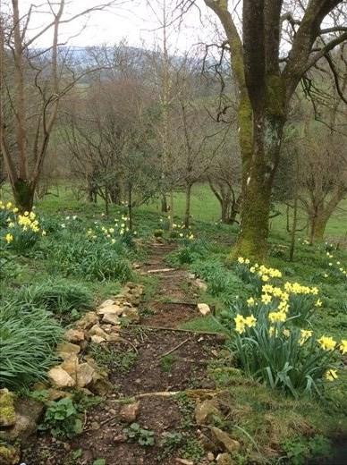 The woodland garden.
