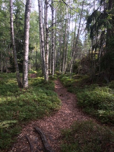 The forest path on Grinda.